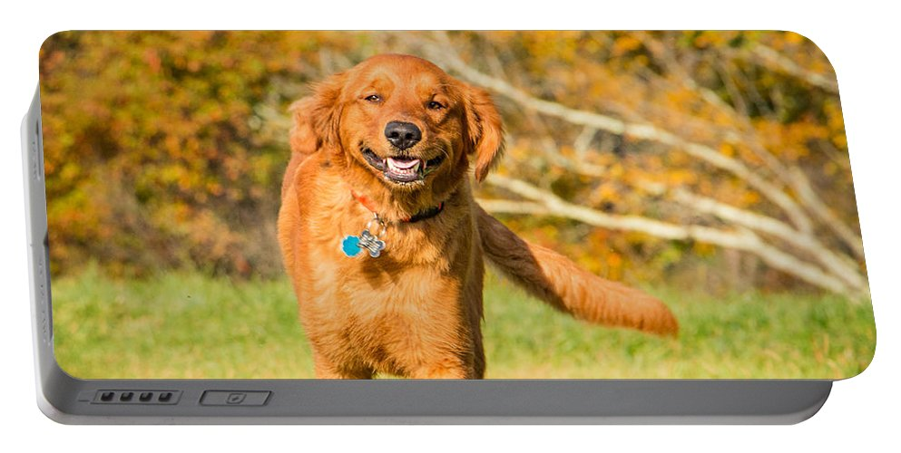 Dog Portable Battery Charger featuring the photograph Retriever On The Run by Edie Ann Mendenhall