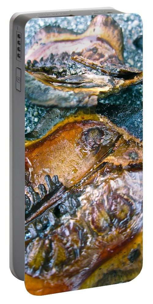 Tree Pod Portable Battery Charger featuring the photograph Revealing Tree Pod by Gwyn Newcombe
