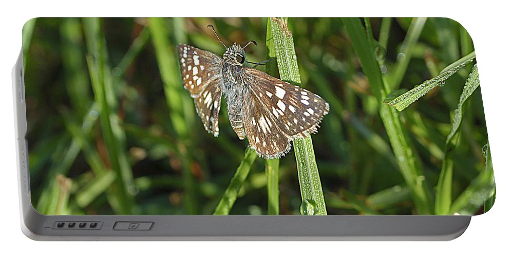 Butterfly Portable Battery Charger featuring the photograph Reversed Roadside Skipper by Kenneth Albin