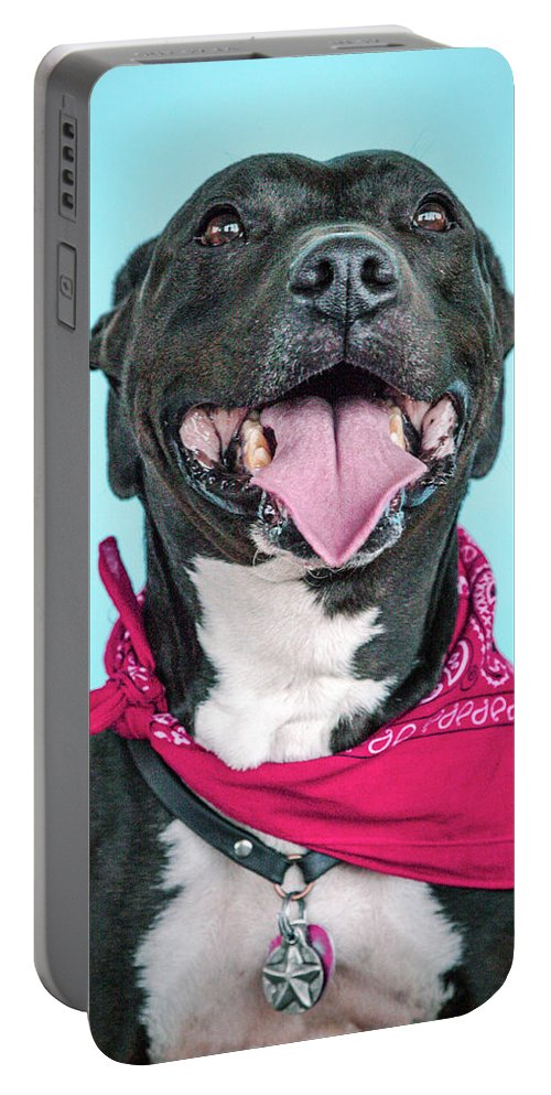 Dogs Portable Battery Charger featuring the photograph Rex 5 by Pit Bull Headshots by Headshots Melrose