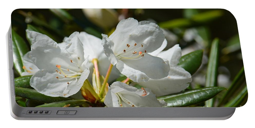 Rhododendron I Portable Battery Charger featuring the photograph Rhododendron I by Maria Urso