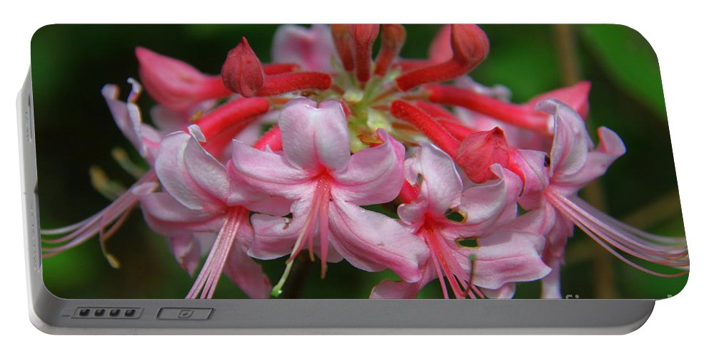 Wild Azalea Portable Battery Charger featuring the photograph Rich Pink Blossoms by Barbara Bowen