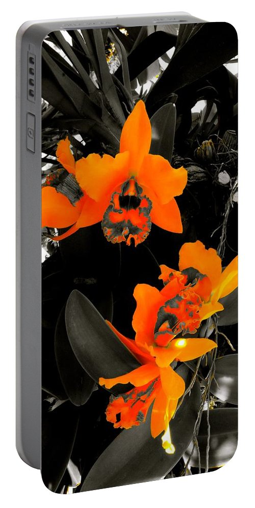 Chicago Botanic Garden Portable Battery Charger featuring the photograph Richness In Sunshine by Tim G Ross