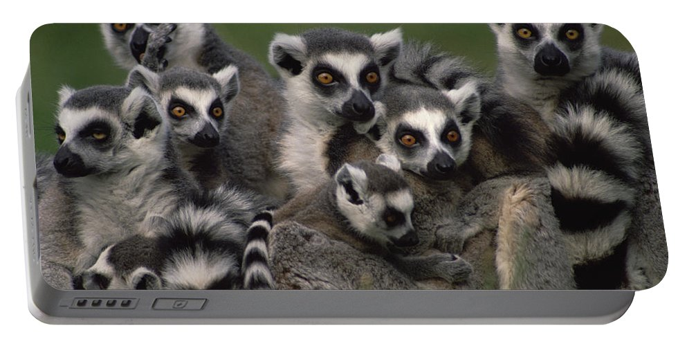 Mp Portable Battery Charger featuring the photograph Ring-tailed Lemur Lemur Catta Group by Gerry Ellis
