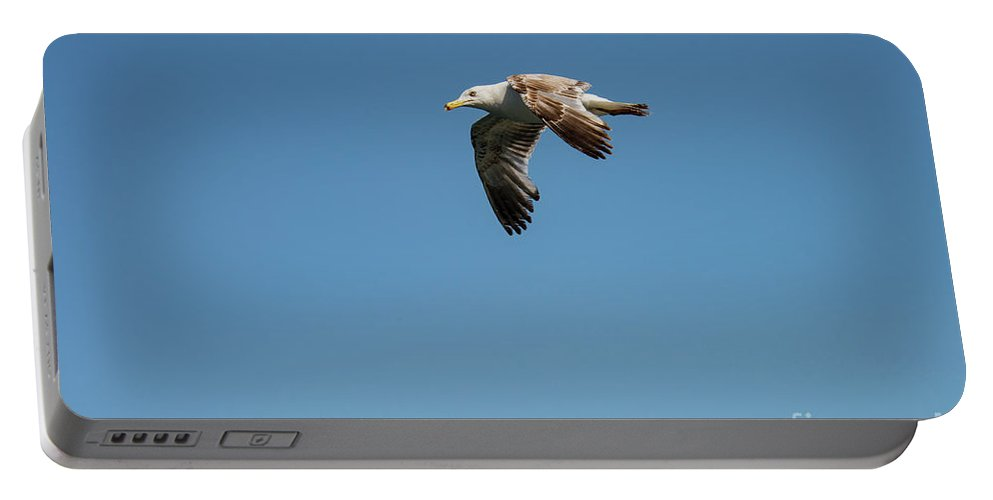 Burgazada Island Portable Battery Charger featuring the photograph Ringed-bill Gull by Bob Phillips