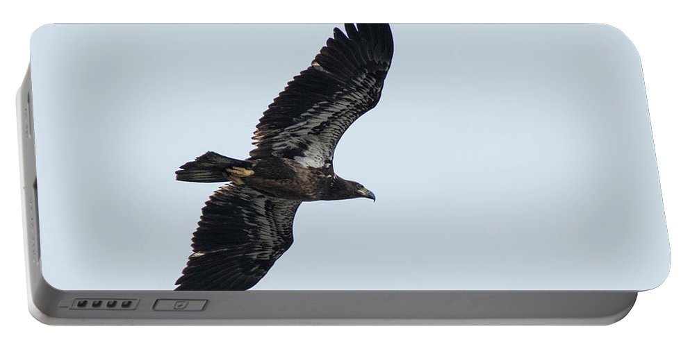 Eagle Portable Battery Charger featuring the photograph Riverwalk Juvie Bald Eagle by Geraldine DeBoer