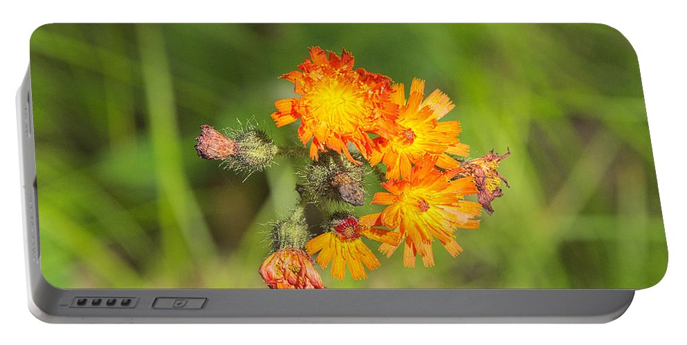 Wild Portable Battery Charger featuring the photograph Roadside Wildflower by Timothy Ruf