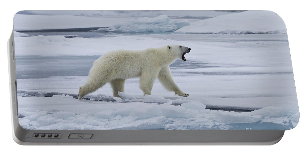 Polar Bear Portable Battery Charger featuring the photograph Roaring Polar Bear by Jean-Louis Klein & Marie-Luce Hubert