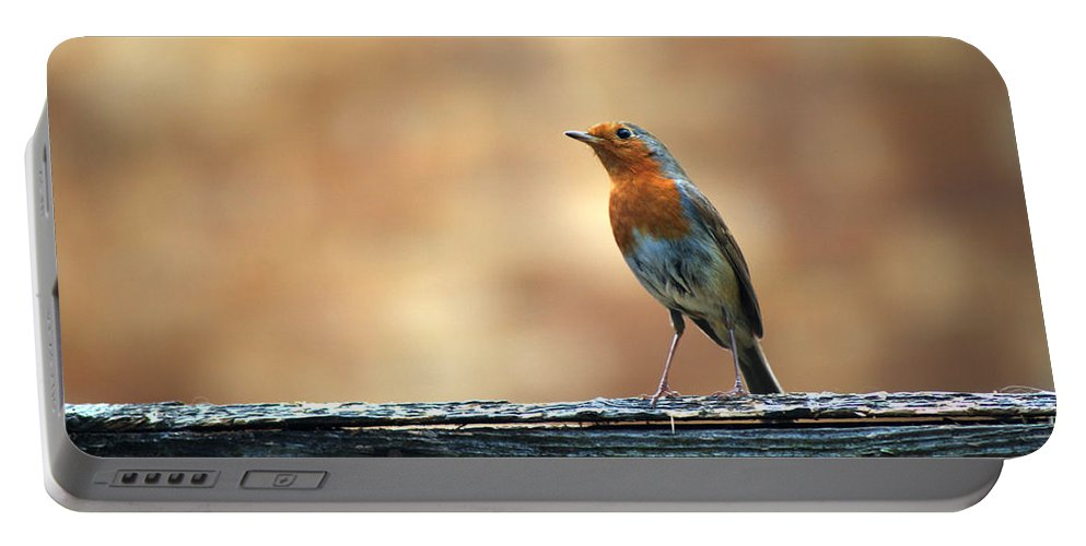 Robin Portable Battery Charger featuring the photograph Robin 2 by Chris Day