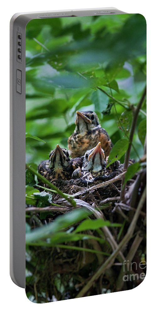 American Robin Portable Battery Charger featuring the photograph Robin Chicks In Nest. by John Greim