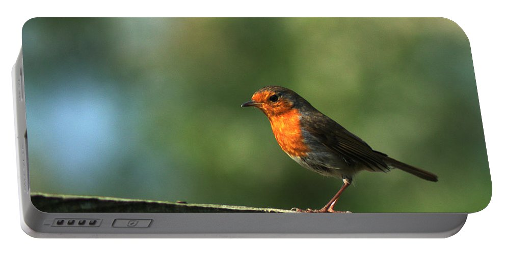 Robin Portable Battery Charger featuring the photograph Robin by Chris Day