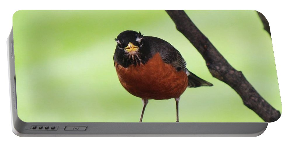 Robin Portable Battery Charger featuring the photograph Robin by Renee Rumsey