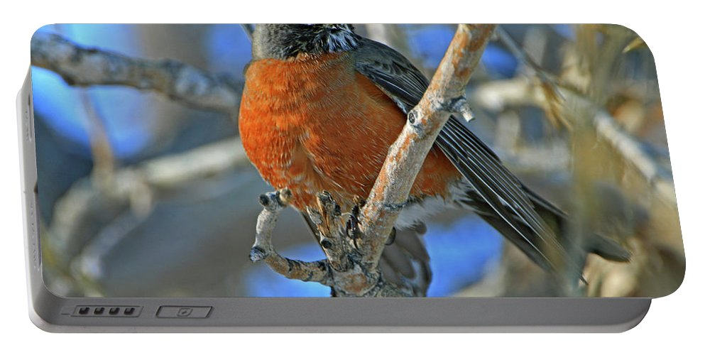 Robin Portable Battery Charger featuring the photograph Robin by Scott Mahon