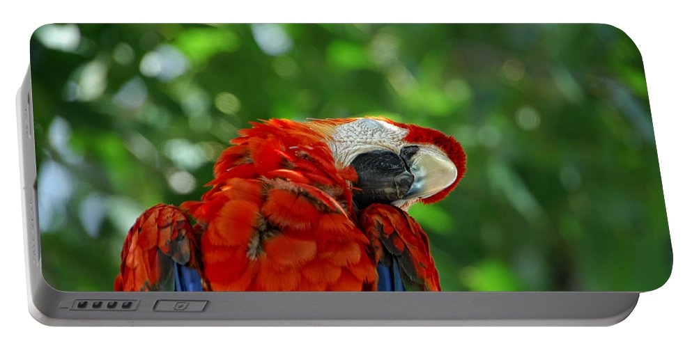 Parrot Portable Battery Charger featuring the photograph Rock A Bye Birdie by Donna Blackhall