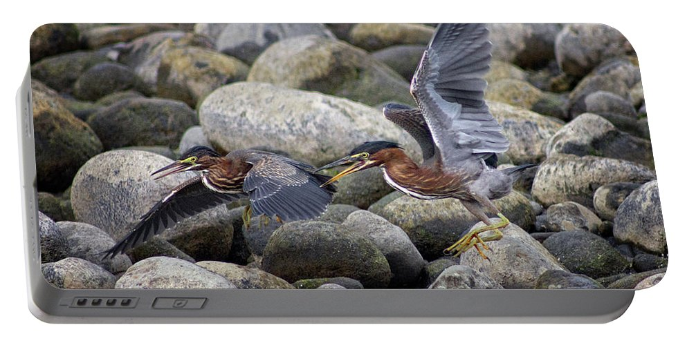El Palmar Portable Battery Charger featuring the photograph Rock Hoppers by Bob Hislop