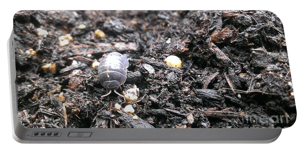 Potato Bug Portable Battery Charger featuring the photograph Roley Poley by LKB Art and Photography