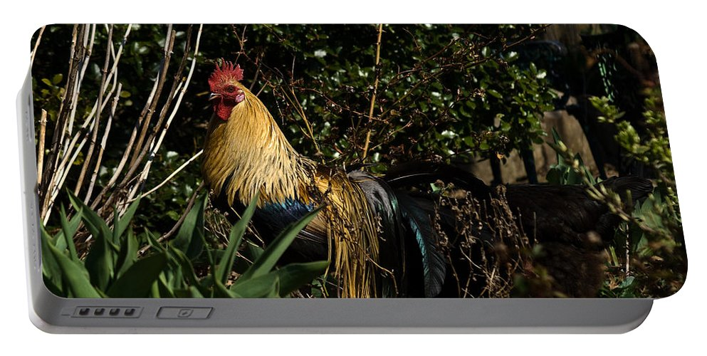 Rooster Portable Battery Charger featuring the photograph Rooster 2 by Douglas Barnett
