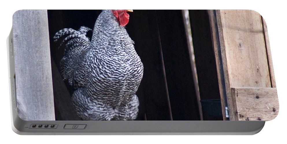 Rooster Portable Battery Charger featuring the photograph Rooster With Attitude by Douglas Barnett