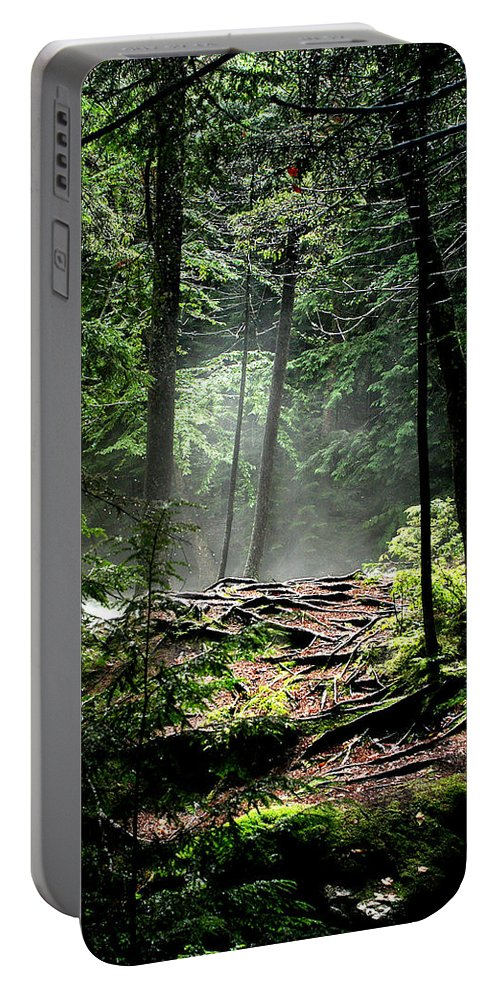 Woods Portable Battery Charger featuring the photograph Roots by Greg Fortier