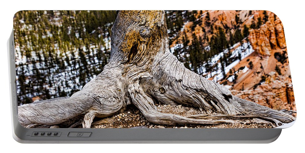 Landscape Portable Battery Charger featuring the photograph Roots Gripping The Edge by Christopher Holmes