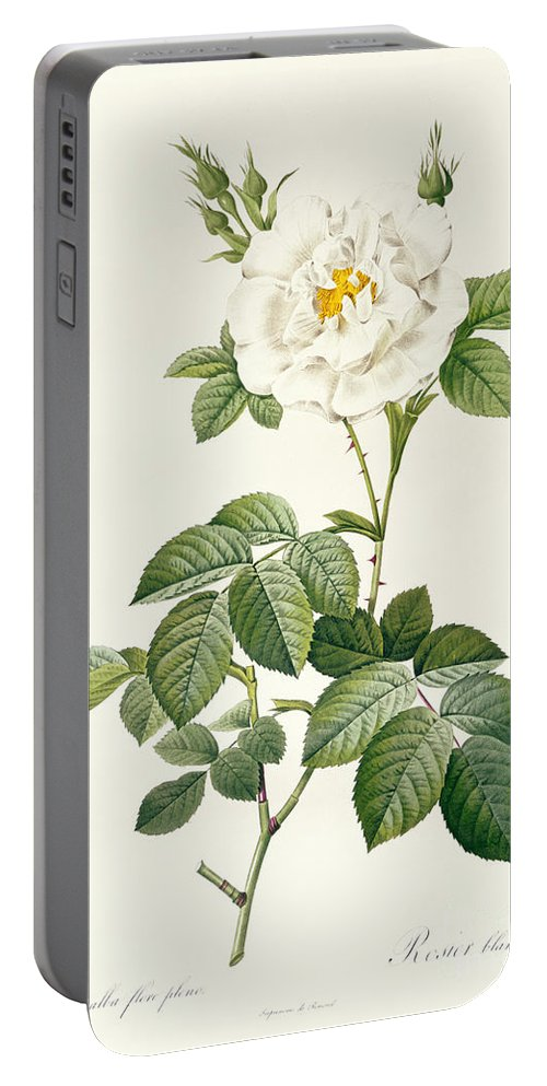 Rosa Portable Battery Charger featuring the drawing Rosa Alba Flore Pleno by Pierre Joseph Redoute