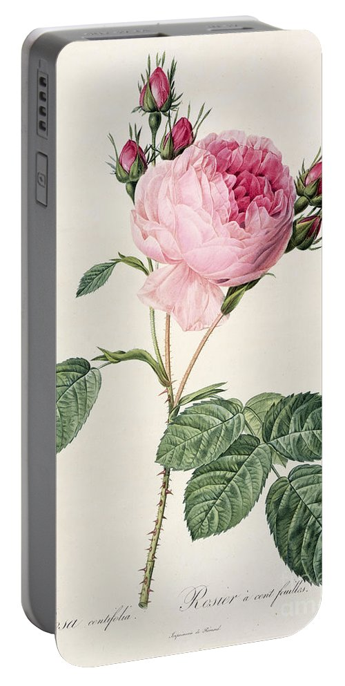 Rosa Portable Battery Charger featuring the drawing Rosa Centifolia by Pierre Joseph Redoute