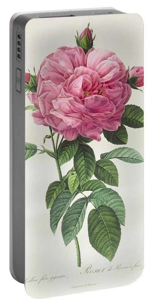 Rosa Portable Battery Charger featuring the drawing Rosa Gallica Flore Giganteo by Pierre Joseph Redoute