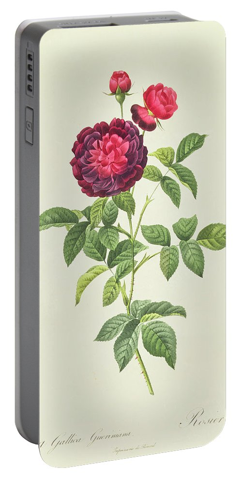 Rosa Portable Battery Charger featuring the drawing Rosa Gallica Gueriniana by Pierre Joseph Redoute