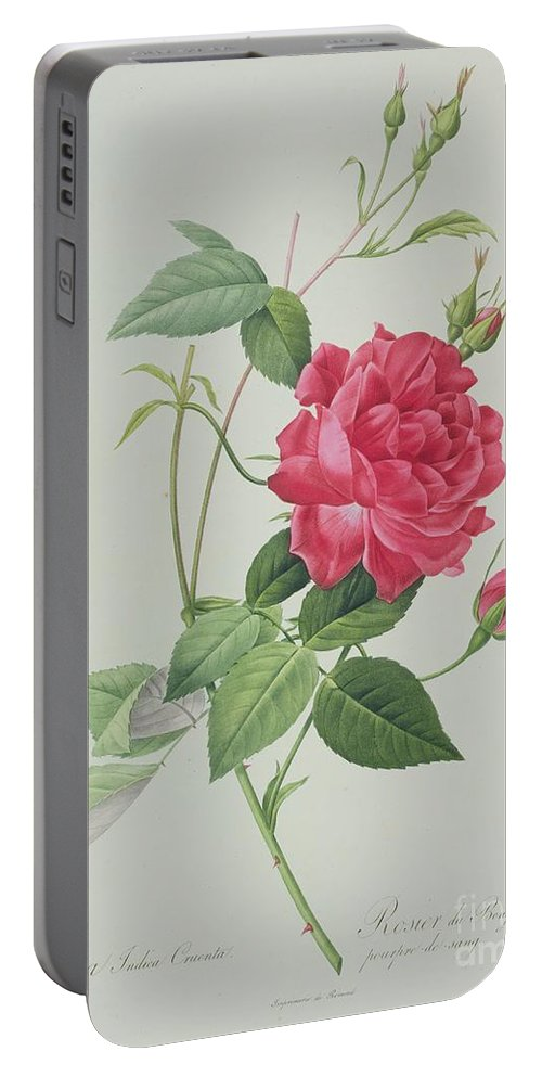 Red Portable Battery Charger featuring the drawing Rosa Indica Cruenta by Pierre Joseph Redoute