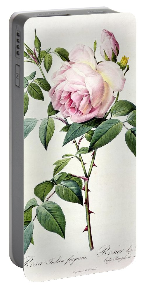 Rosa Portable Battery Charger featuring the drawing Rosa Indica Fragrans by Pierre Joseph Redoute