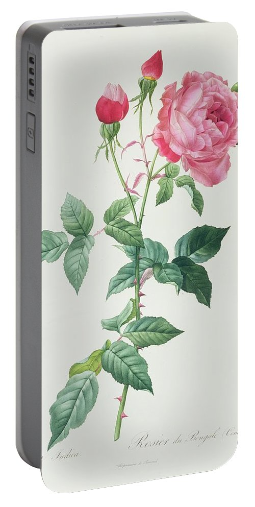 Rosa Portable Battery Charger featuring the drawing Rosa Indica by Pierre Joseph Redoute