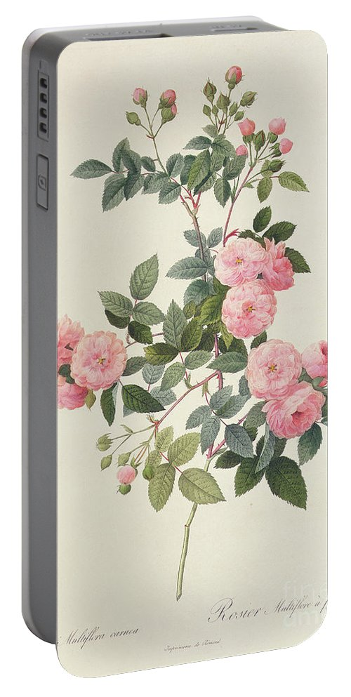 Rosa Portable Battery Charger featuring the drawing Rosa Multiflora Carnea by Pierre Joseph Redoute