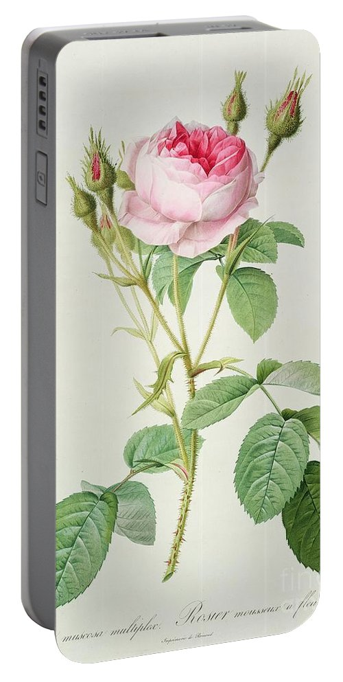 Rosa Portable Battery Charger featuring the drawing Rosa Muscosa Multiplex by Pierre Joseph Redoute