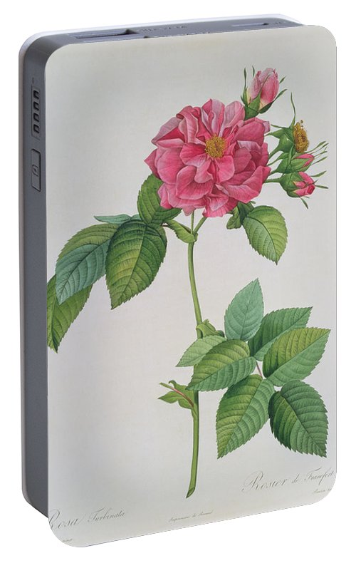 Rosa Portable Battery Charger featuring the drawing Rosa Turbinata by Pierre Joseph Redoute