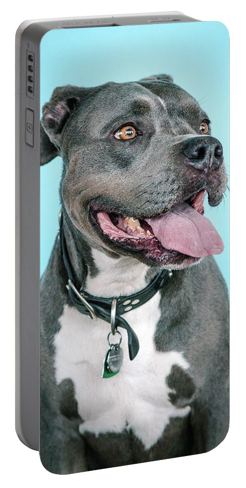 Dogs Portable Battery Charger featuring the photograph Rascal by Pit Bull Headshots by Headshots Melrose