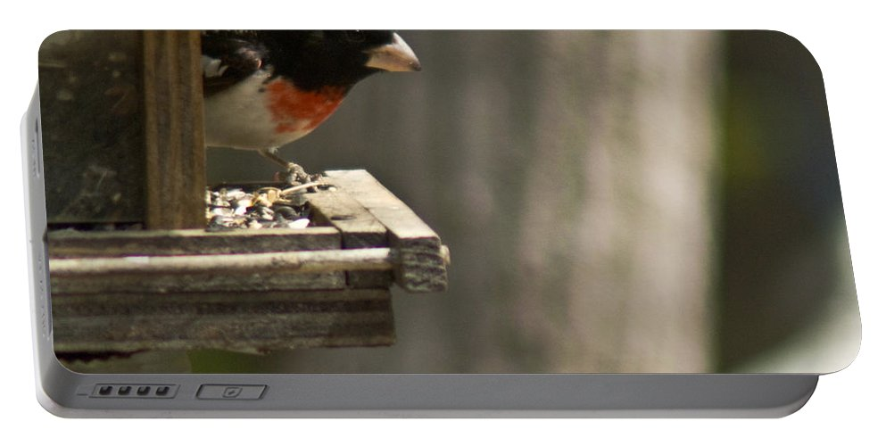 Rose Portable Battery Charger featuring the photograph Rose Breasted Grosbeak Feeding by Douglas Barnett