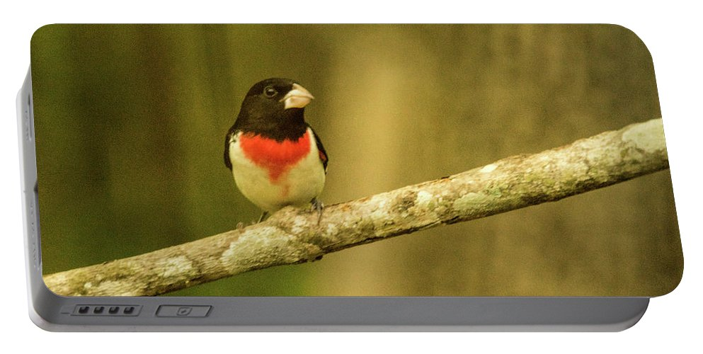Grosebeak Portable Battery Charger featuring the photograph Rose Breasted Grossbeak Eying You by Douglas Barnett