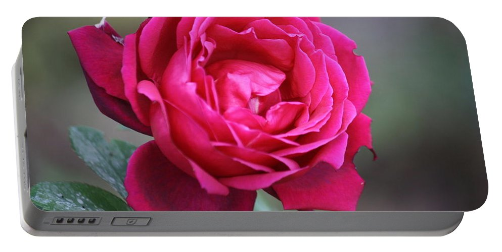 Floral Portable Battery Charger featuring the photograph Rose by Donna Walsh