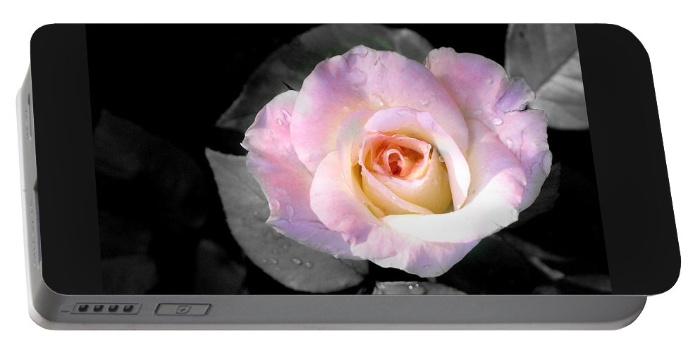 Princess Diana Rose Portable Battery Charger featuring the photograph Rose Emergance by Steve Karol