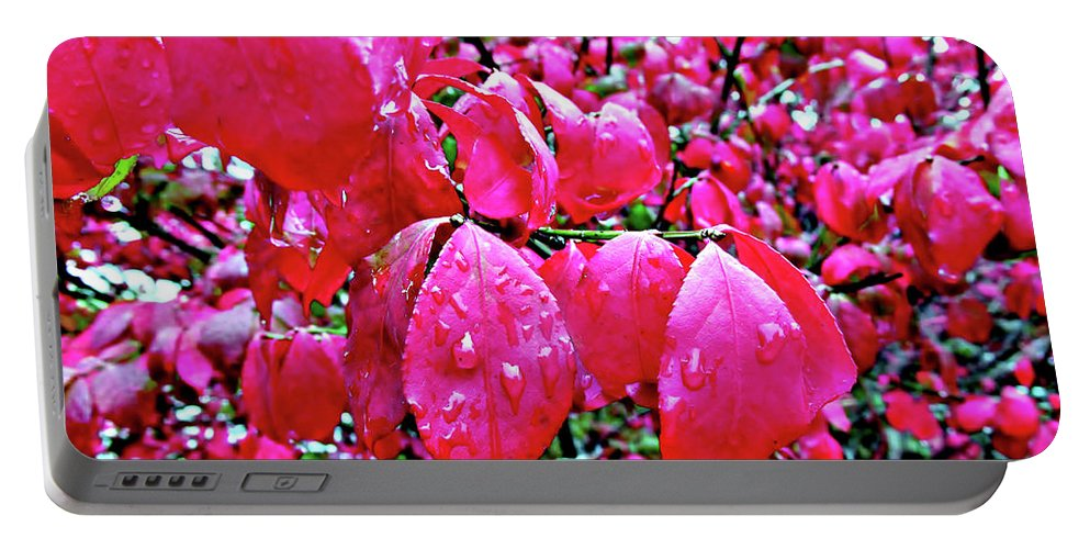Leaves Portable Battery Charger featuring the photograph Rose Red 2 by Don Baker