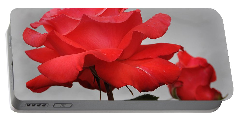 Floral Portable Battery Charger featuring the photograph Rose by Steven Natanson