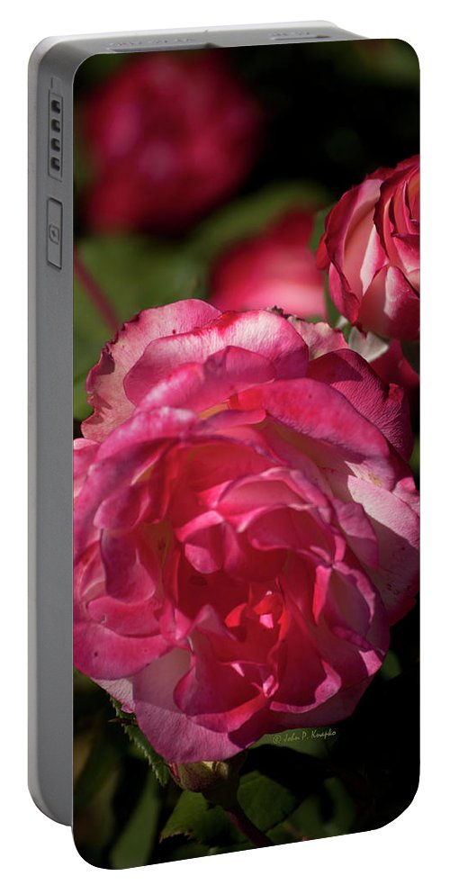 John Knapko Portable Battery Charger featuring the photograph Rose To The Occasion by John Knapko