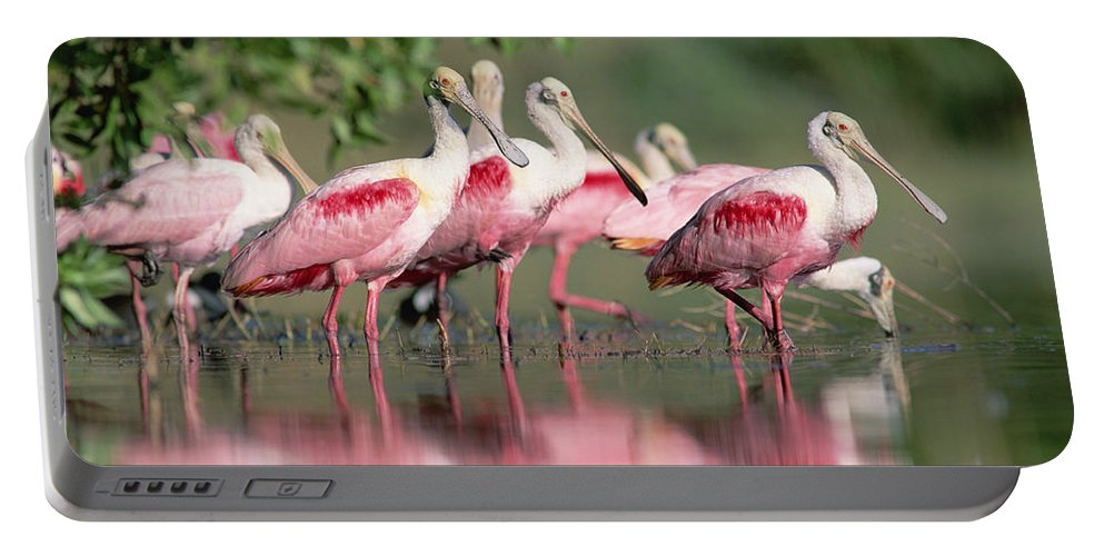00171421 Portable Battery Charger featuring the photograph Roseate Spoonbill Flock Wading In Pond by Tim Fitzharris