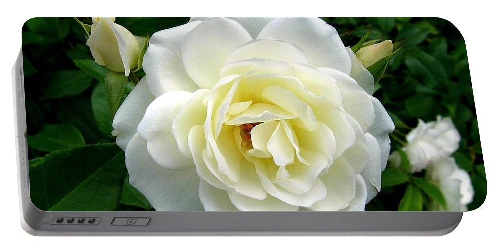 Rose Portable Battery Charger featuring the photograph Roses 2 by Will Borden