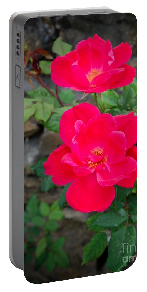 Rose Portable Battery Charger featuring the photograph Roses Are Red by Gary Richards
