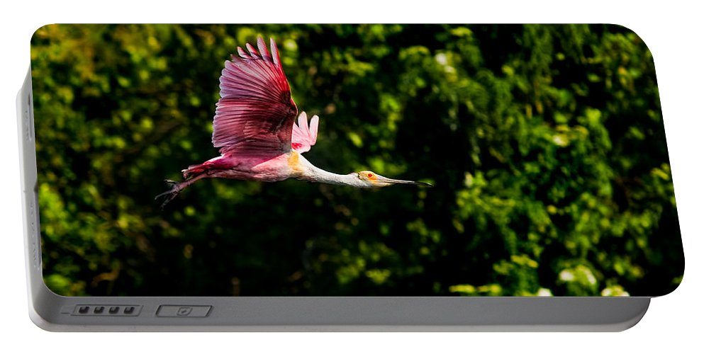 Avian Portable Battery Charger featuring the photograph Rosie In Flight by Christopher Holmes