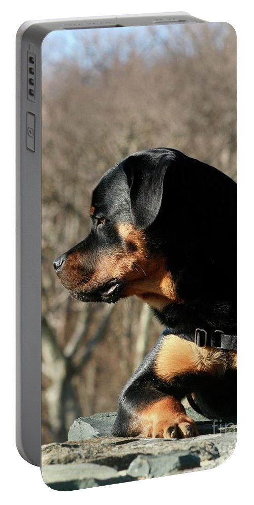 Rottweiler Portable Battery Charger featuring the photograph Rottie Profile by Gregory E Dean