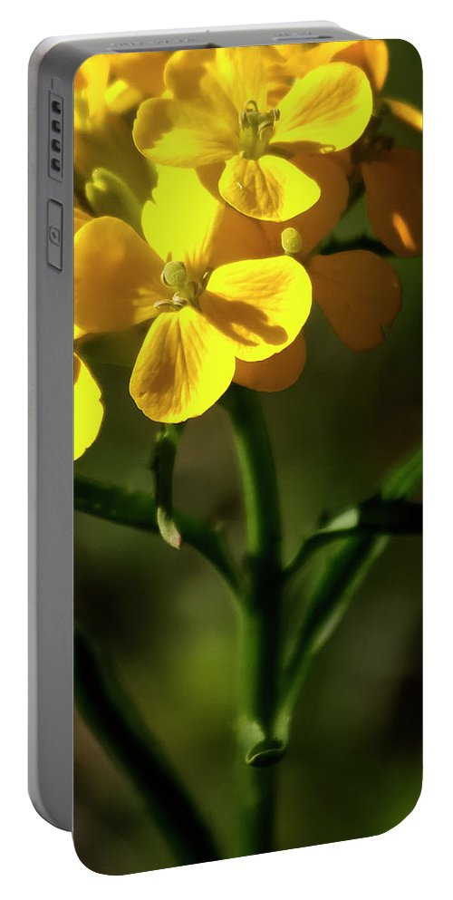 Wildflowers Portable Battery Charger featuring the photograph Rough Wallflower - 60618-122 by Albert Seger