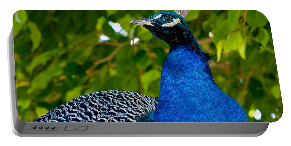 Avian Portable Battery Charger featuring the photograph Royal Bird by Christopher Holmes