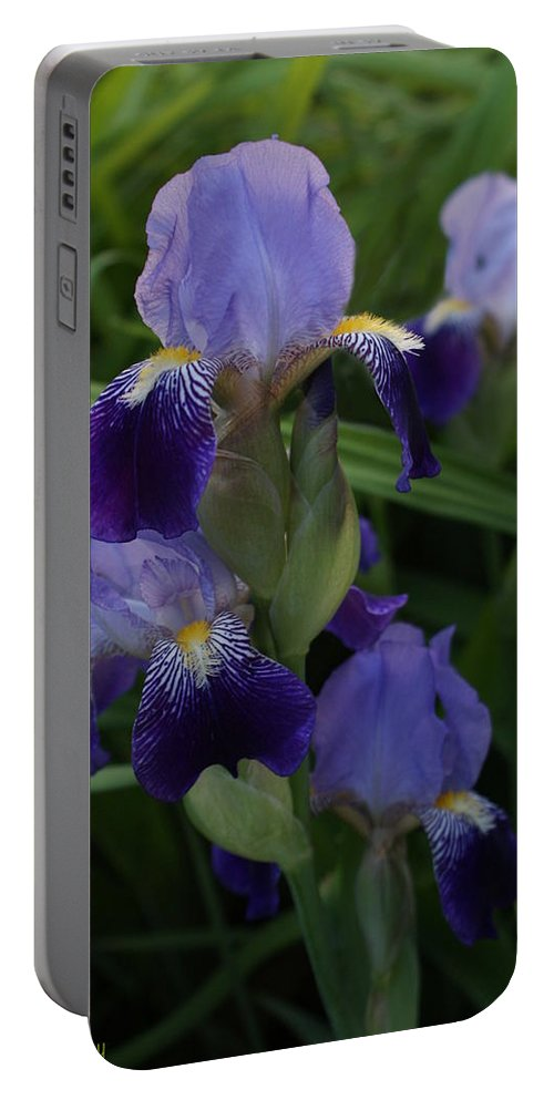 Iris Portable Battery Charger featuring the photograph Royal Purple Iris's by Joanne Smoley